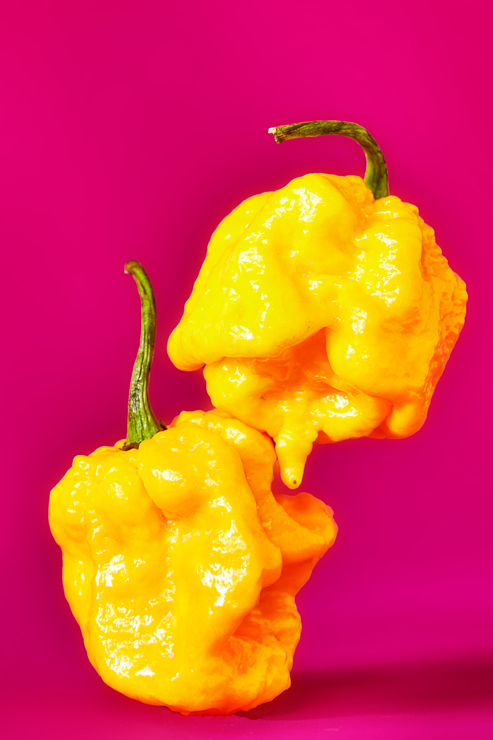 dominic-perri-project-kitchen-garden_peppers-yellow-trinidad-scorpion